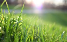 lawn care industry